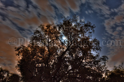 High dynamic range shot of the full moon shining through the branches of an African Sumac tree.