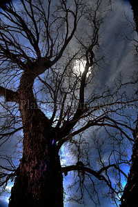 The full moon shines through a bare spooky tree in Southern Arizona.