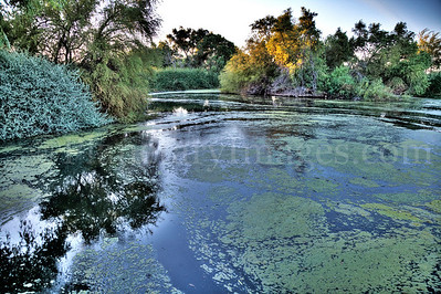 A magical pond at the Sweetwater Wetlands water treatment facility in Tucson, Arizona.