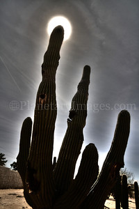The full moon shines in the tip of a saguaro cactus arm in Southern Arizona.