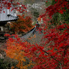 Time<br /> <br /> Rust brown white Oak,<br /> Golden yellow Pagoda,<br /> Burnt red Japanese Maple,<br /> Leaves fall down,<br /> Change time.<br /> <br /> Blair
