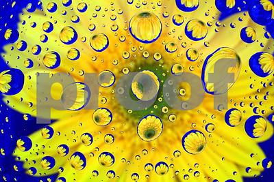 Daisy many times macro 3-6-10 4 6880