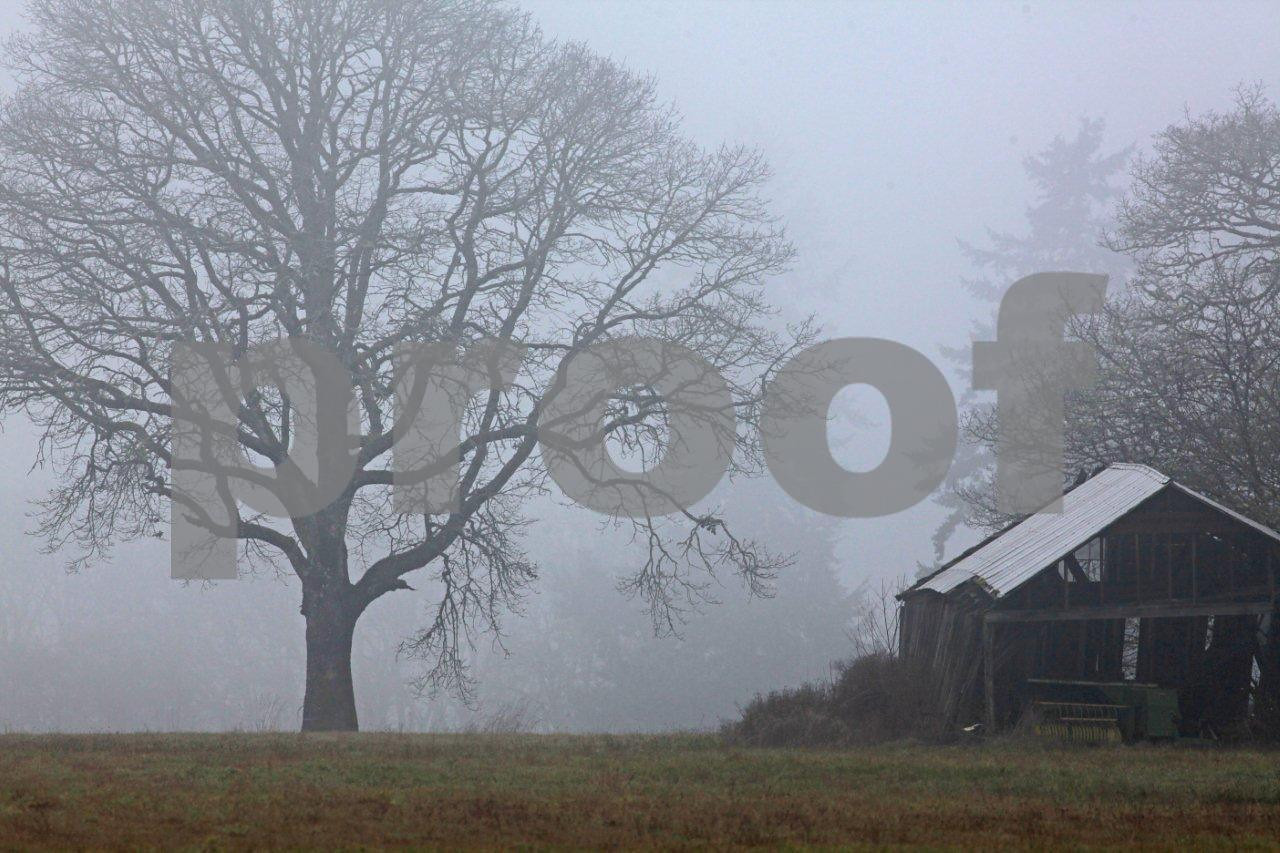 Oak fog barn 5468c