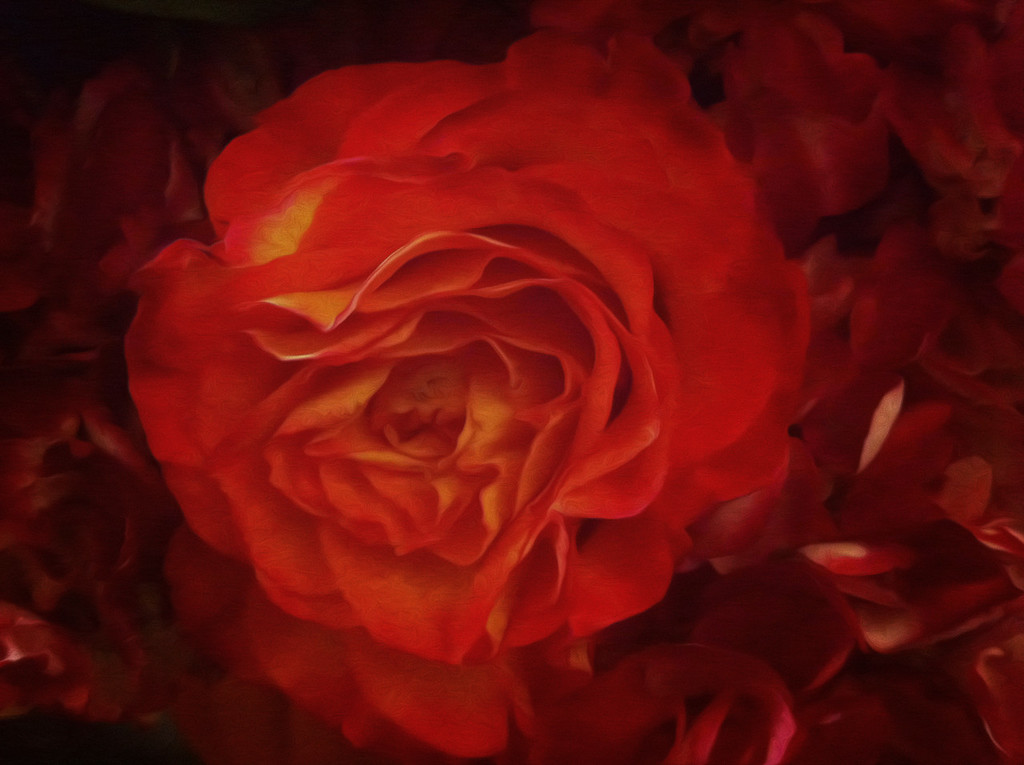 Red Red Rose