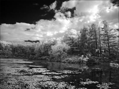 Harriman Landscape