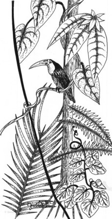 Rain Forest: Ink illustration for a magazine article on rain forests..