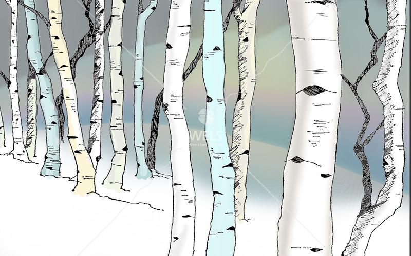 Winter Birch by jduran