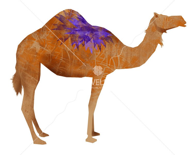 Camel by cnelson