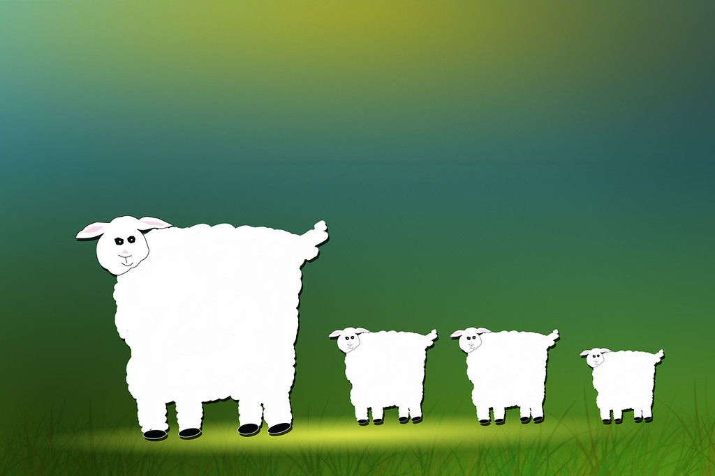 Sheep and Family