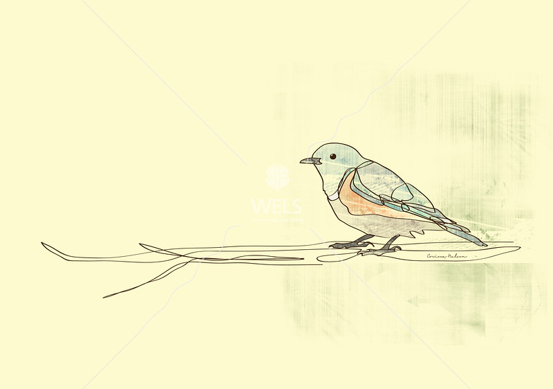 Bird sketch by cnelson