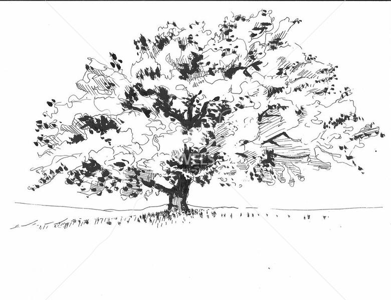 Tree 4 by jjaspersen