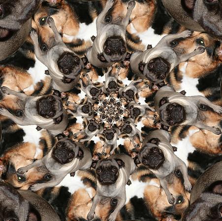 Pug and Shepard Tesselation