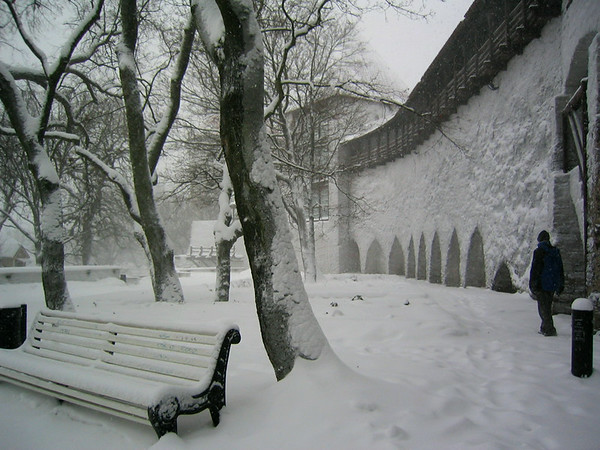 A man walks in a snowy park in Tallin, Estoina.  (Jenni Farrow)