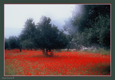 Red Carpet Participated in the   Four Seasons: Spring Exhibition Galerina, Israel, 2011