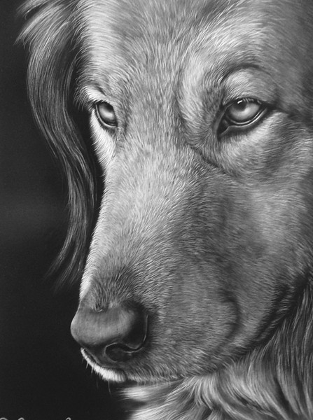 """Dog""  11 x 14 India Ink on Claybord"