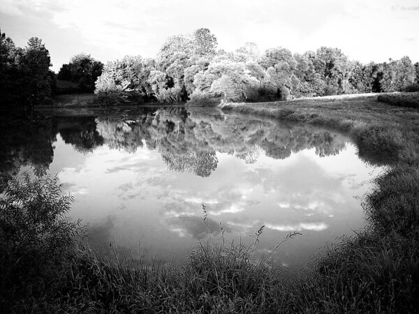Pond in Yadkin county NC