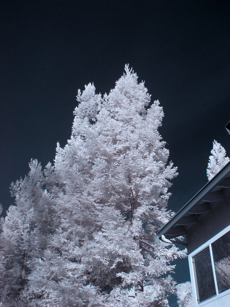Image of tree by house.