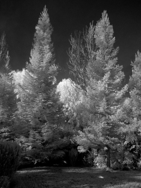 Infrared image of backyard, converted to black and white