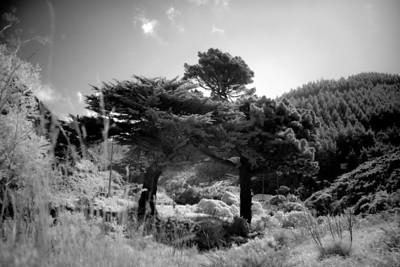 Tree on Trees