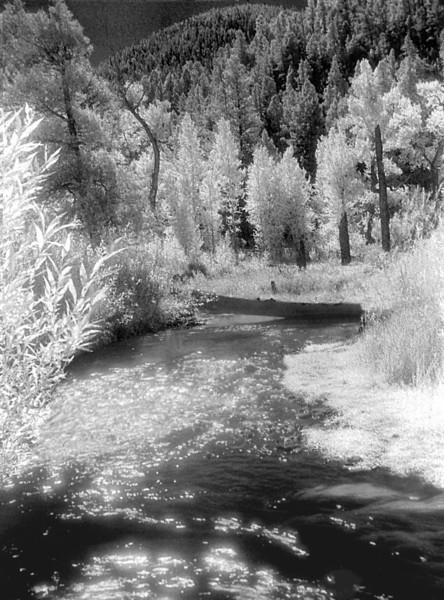 New Mexico Stream