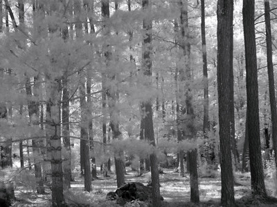 Virginia Trip 2006 - Pine Grove 06 IR From Road