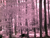 Virginia Trip 2006 - Pine Grove 05 IR From Road (bk & wh pt set