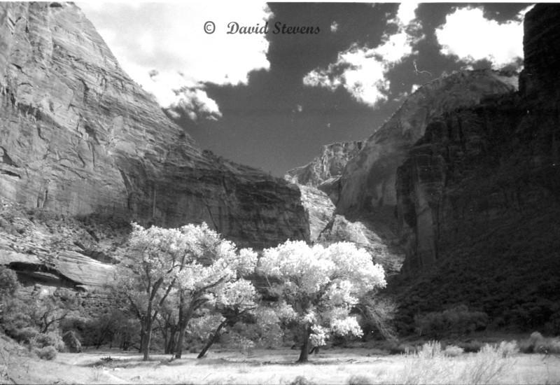 Zion trees cliffs