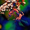 Warring Wasps