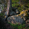 Tree and Rocks, Rock Harbor Trail, Isle Royale National Park, Michigan