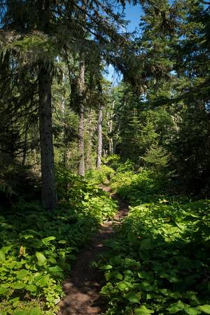 Stoll Trail, Isle Royale National Park, Michigan