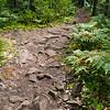 Stony Hunter's Point Trail, Copper Harbor, Michigan