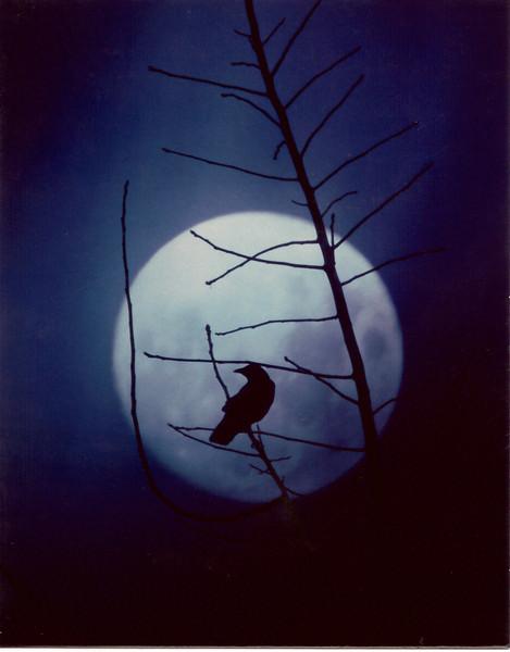 Full Moon Larkspur, CA.