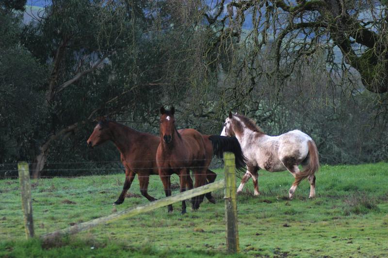 Horses Gone Wild