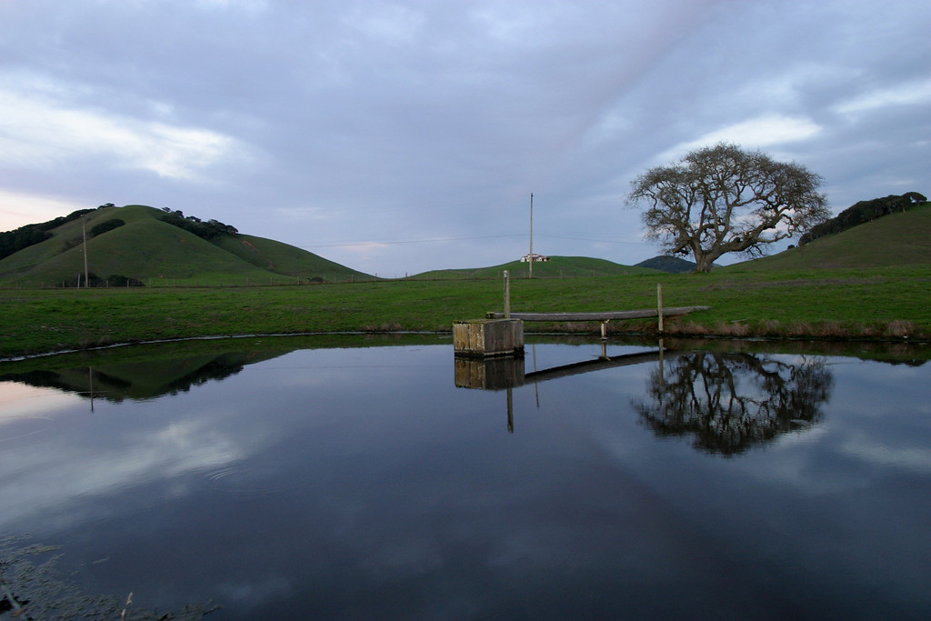 Chileno Valley Pond in Petaluma