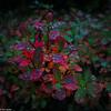Blokkebærblad i høstskogen
