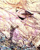 Girl on a nest