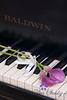 Piano Romance-1