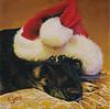 A Dog's December
