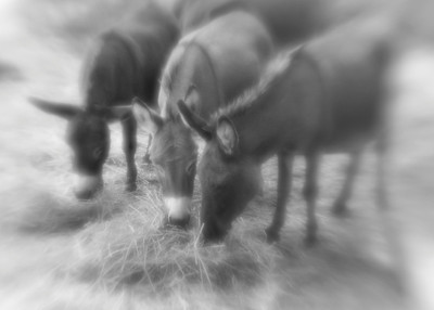 One of the first photos taken on the farm with a Lensbaby Original lens on my Nikon.