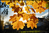 25PhotoTwentyFive_FirstAndLastFall_Leistner_24x36