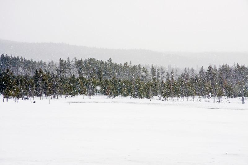 Snowfall in Yellowstone Park