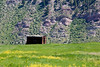 Meadow Mountain Line Shack with Yellow Wildflowers - Minturn, Colorado