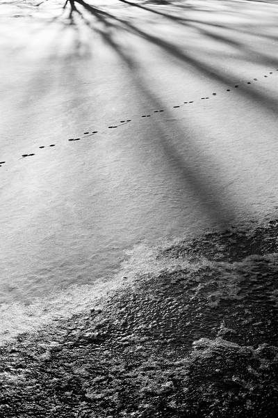 Winter Shadows and Footprints on Ice at Izaak Walton Park - Leesburg, Virginia