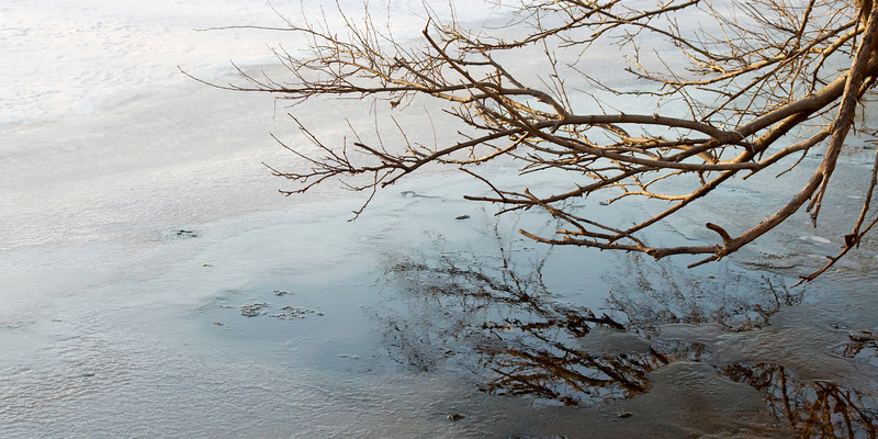 Winter Tree Branch Reflection at Izaak Walton Park in Leesburg, Virginia
