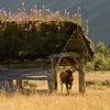 Ku i motlys (2006)