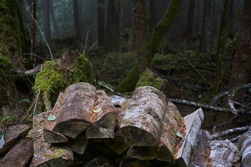 Abandoned firewood