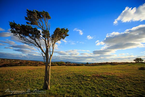 Wind-shaped Tree