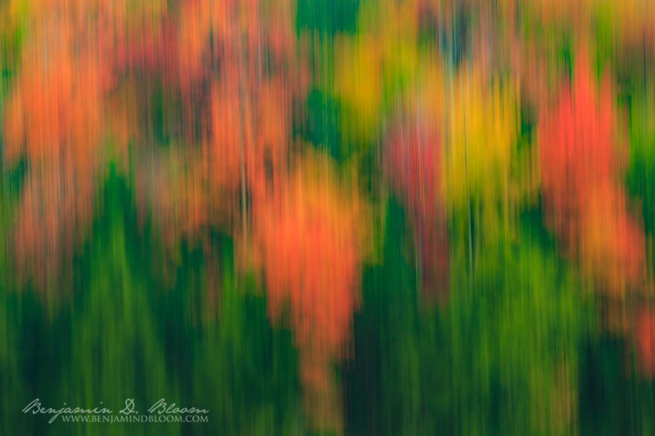 Abstract Foliage