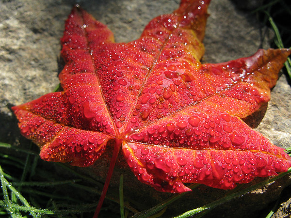 The smallest of leaves can make a BIG impression. Photo by Jared Rogers