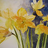 "Dancing Daffodil<br /> watercolor<br /> 22"" x 15 SOLD"